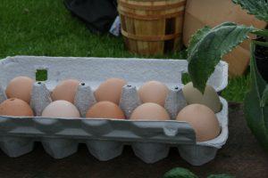 photo of eggs